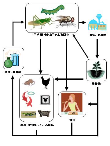 図2.持続可能な昆虫利用モデル [水野壮(生物科学, 2015)より改変]
