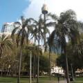 シドニー、ハイドパーク(2014年2月22日)