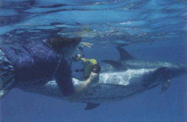 水中ビデオを手にイルカを追う著者。マイケル・グリーン撮影