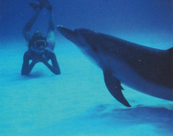 人間の真似をして、海底で寝そべるリトルガッシュ(メスのイルカ)。著者撮影