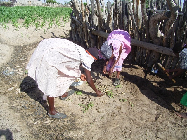 コガネムシの幼虫を掘る女性たち