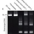 H Obokata et al. Nature 505, 641-647 (2014) doi:10.1038/nature12968より引用、改変