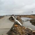 (写真9:請戸湾、波で破壊された堤防(2014年3月2日撮影))