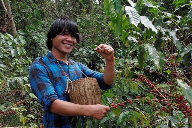写真1:収穫するコーヒー農家(筆者撮影)