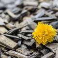 yellow-370256_640