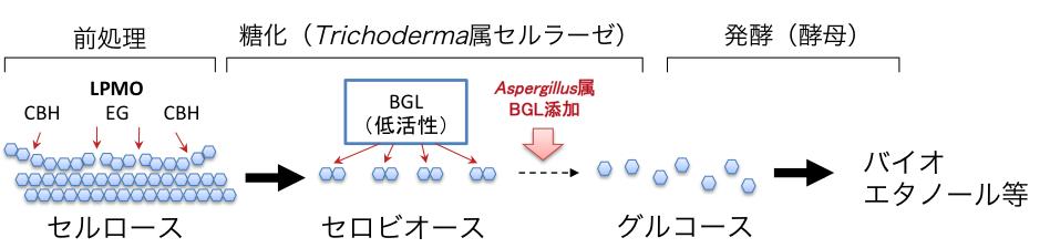 図5 β−グルコシダーゼ(BGL)による糖化過程