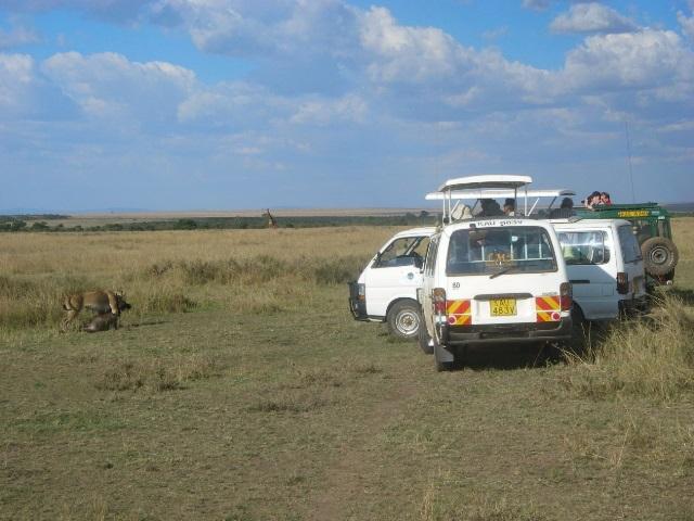 保護区の中で獲物をくわえたライオンの写真を間近から撮ろうと近寄る観光客の車。野生動物を目当てとする観光業は、ケニアの重要な産業である。