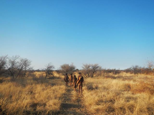 原野のなかをブッシュ・ウォークに向かう人たち。数十年前に見られた故郷での狩猟採集生活によく似ていても、その内実は異なる。