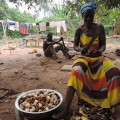 女性は集めてきたコーラナッツを少しずつ売って現金を得る