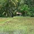indonesia-1203254_960_720