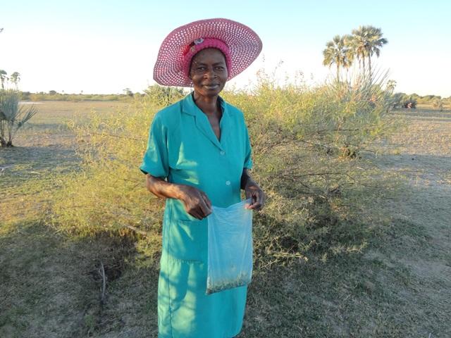 オカナンゴレ(イラガの幼虫)を集める女性