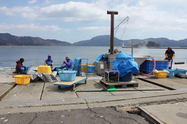 山田湾でのワカメの収穫作業(2013年3月)