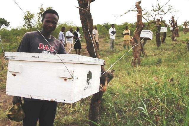 畑の養蜂箱