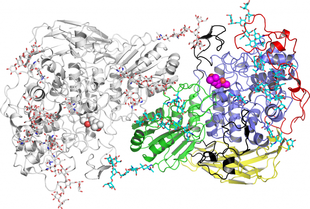 図6 Aspergillus属β−グルコシダーゼ(BGL)の構造