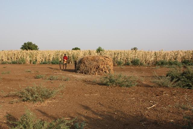 農場に雇用された地域住民。仕事は、牧畜民の家畜が農場の作物を食い荒らさないように警備することだ。仲間の家畜を追い払わなければならないのは複雑な気持ちだと、この人物は語った。