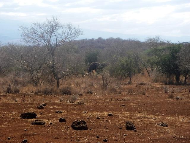 集落から数10メートルの距離に現れたゾウ。この時は集落の男性が地面に落ちていた木の枝を何本も投げるなどして追い払っていた。