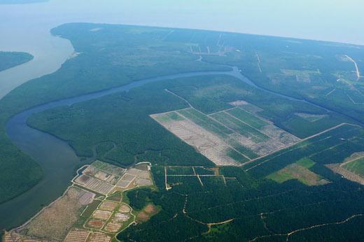 低湿地でも開発がすすむアブラヤシ林。[2009年11月、マレーシア・サバ州にて筆者撮影]