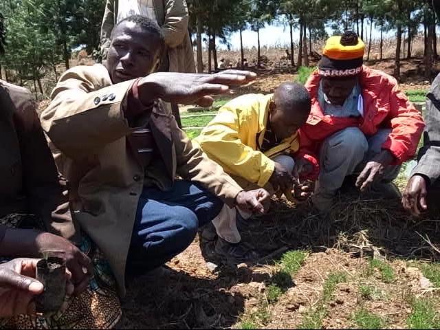 パツラマツの幼苗を育苗チューブに移植する方法を教わる