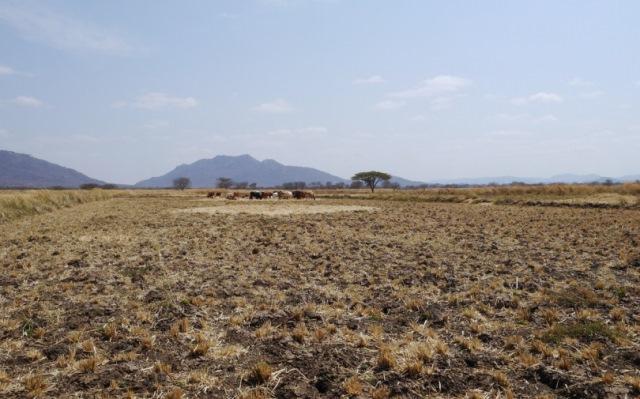 タンザニア02