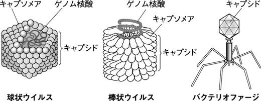 nakayashiki01